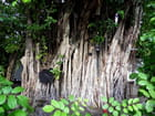 Mangrove (1)