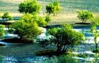 Mangrove près de Tuléar