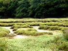 Marais de la ria du Conquet