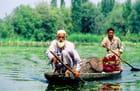 Marchands de fleurs sur le lac Dal