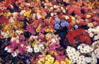 Marché aux fleurs !