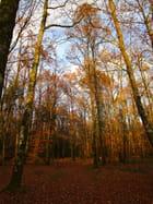 marcher sur les feuilles sèches