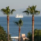 Mariage entre des palmiers et un voilier