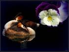 mariage,fleurs et oiseaux