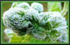 Matin frisquet pour les plantes - 2