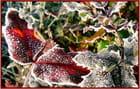 Matin frisquet pour les plantes- 3
