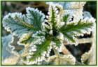 Matin frisquet pour les plantes - 4