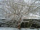 Méchanique d'un arbre