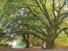 Méditation au pied d'un arbre
