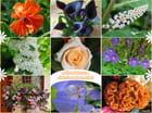 Méli-mélo de fleurs (Francine)