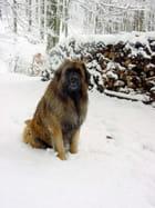 Meo dans la neige