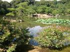 Merveilleux jardin à KYOTO