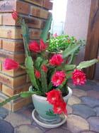 Mes cactus 2009