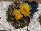 Mes cactus 2010
