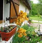 Mini cactus et iris géants