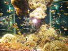 Miriade de poissons