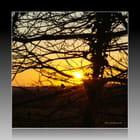 Moineau admiratif devant le coucher de soleil