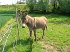Mon âne... mon âne...a bien........