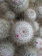 Mon doux cactus.......