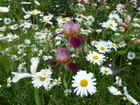 Mon fouillis de fleurs dans le jardin - 1