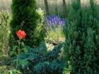 Mon jardin 02994