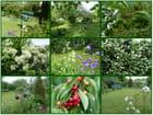 Mon petit jardin en Normandie