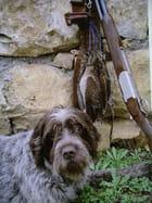 mon vieux chien avec ses trois dernieres becasses