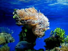 Monaco aquarium anémone