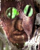 Monstre des bois