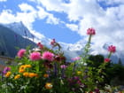 Mont Blanc fleuri