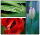 Montage florale