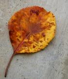 Mosaïque d'automne