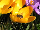 Mouche sur fleur