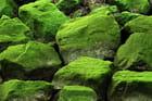 Mousse d'algues sur rochers
