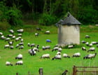 Mouton bleu