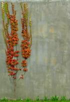 Mur de thomery