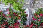 Mur en fleurs.