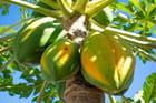 Nature ile de la Réunion