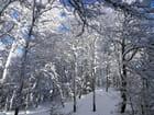 Neige en montagne (5)