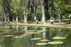Nénuphars géants d'Amazonie