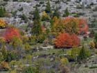 Nevache automne 12