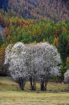 Nevache automne 9