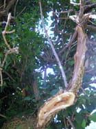 Noblesse de l'arbre