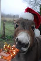 Noël animal