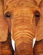 Notre éléphant
