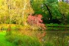novembre au bord de l'étang