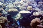Océanorium
