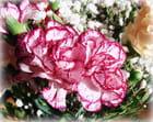 Oeillets et autres fleurs