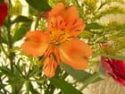 Oh ,la jolie fleur!...
