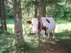 oh la vache !!!
